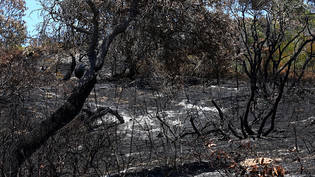 ***FILE IMAGE***.Bushfire damage is seen outside the Cathedrals camping ground on  K'gari (Fraser Island), QLD,  Saturday, November 21, 2020. Tourists have been ordered to stay away from Queensland's world heritage-listed Fraser Island as a massive…